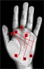הקווים המרכזיים בכף היד